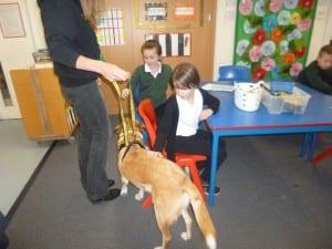 Dogs Trust 006